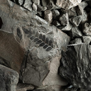 galerie_musee_Fossile_Foucheres